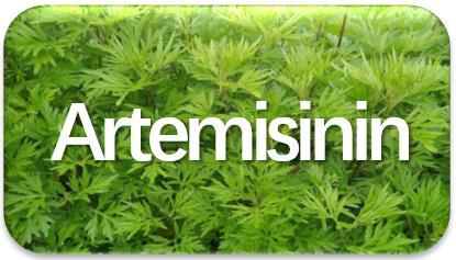 Artemisinin-extraction