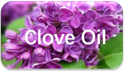 Clove -Oil-extraction
