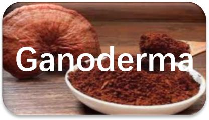Ganoderma-spore-oil-extraction