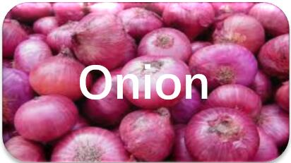 Onion-oil-extraction