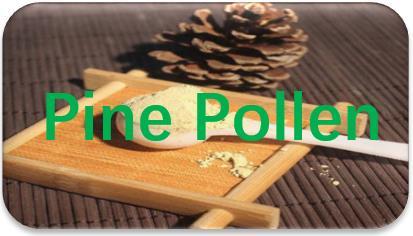 Pine-Pollen-oil-extraction