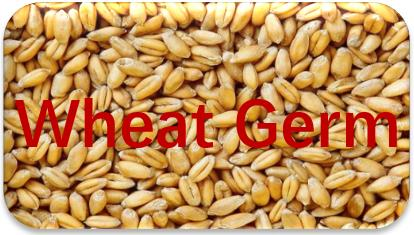 Wheat-Germ-oil-extraction