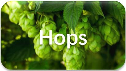 hops-extraction